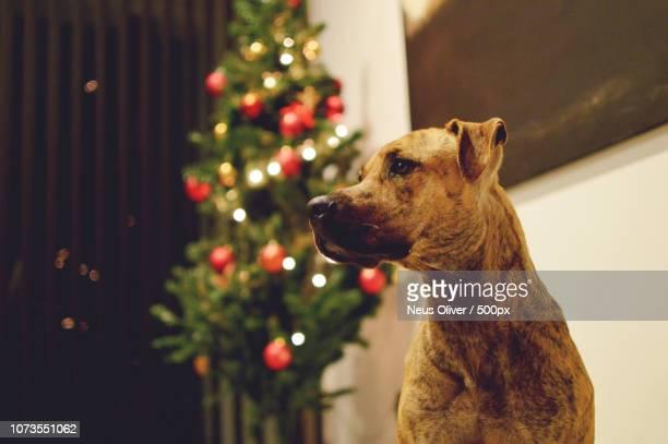 Bernat and the Christmas tree