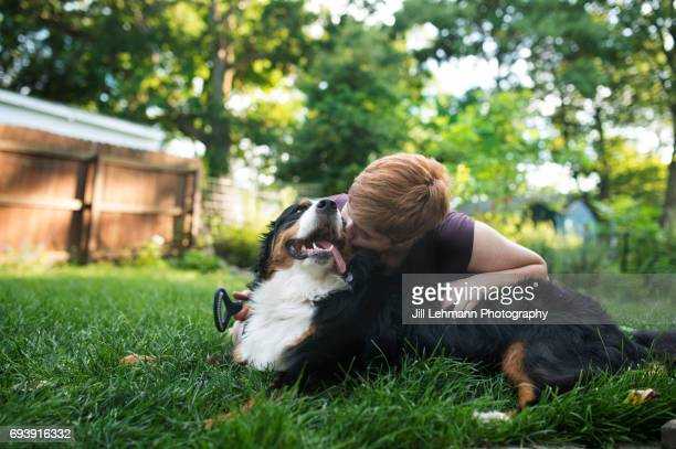 A Bernese Mountain Dog Is Groomed and Brushed by Owner