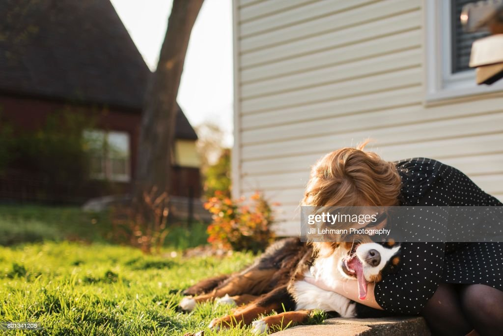 A Bernese Mountain Dog Is Hugged By Owner outside : Stock Photo