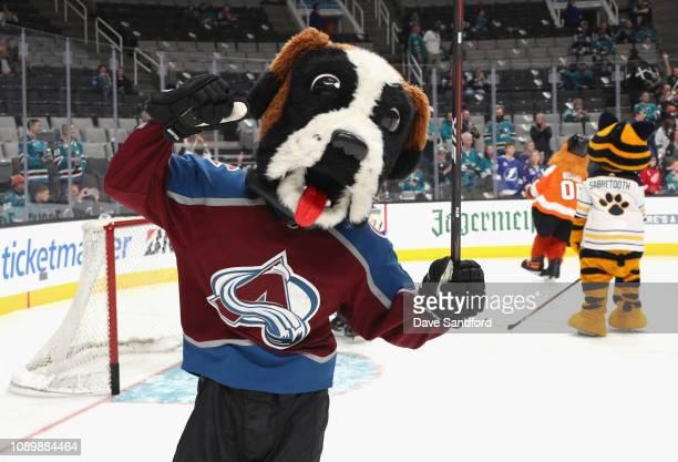 Bernie of the Colorado Avalanche participates in the 2019 NHL AllStar Mascot Showdown at the SAP Center on January 24 2019 in San Jose California