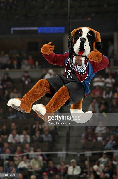 Bernie the mascot of the Colorado Avalanche makes his debut during the first intermission against the Vancouver Canucks during NHL action at the...