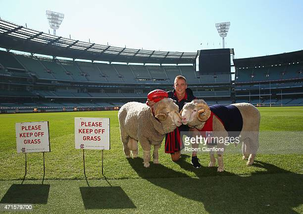 Bernie Vince of the Demons poses with two sheep during a Melbourne Demons AFL media opportunity at Melbourne Cricket Ground on April 30 2015 in...