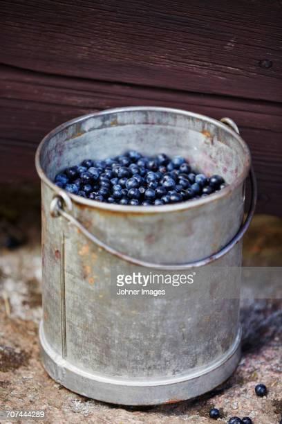 Berries in metal bucket