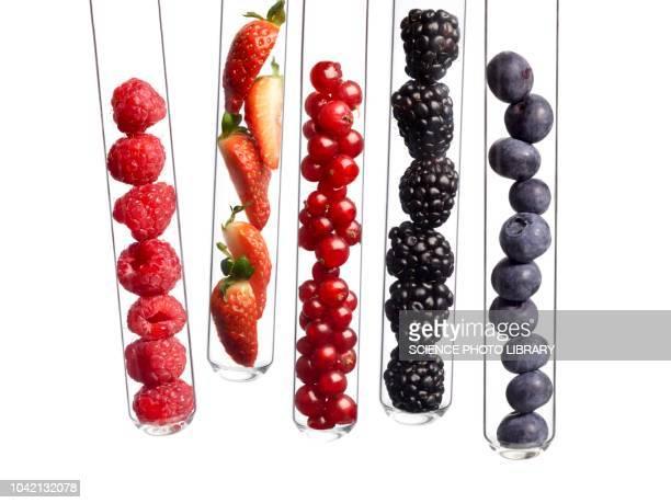 berries in test tubes - johannisbeere stock-fotos und bilder