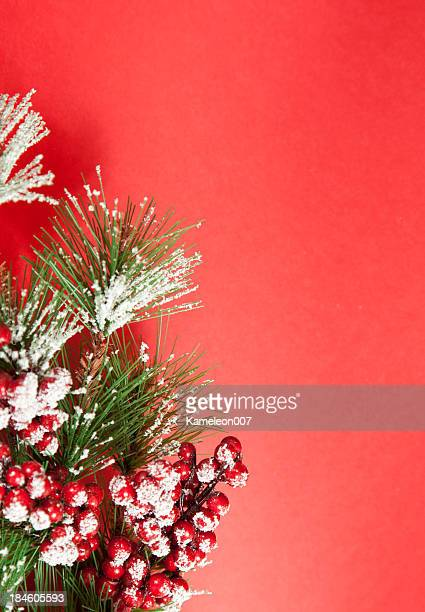 berries - what color are the berries of the mistletoe plant stock pictures, royalty-free photos & images