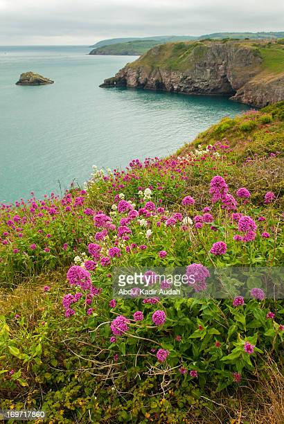 Berry Head in spring time - part two