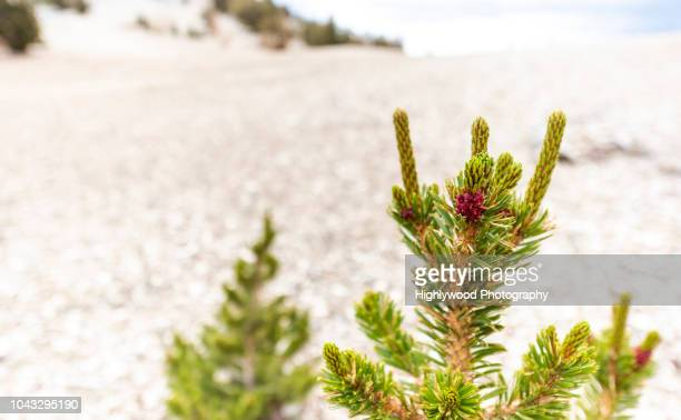 berry in a barren landscape - highlywood stock photos and pictures