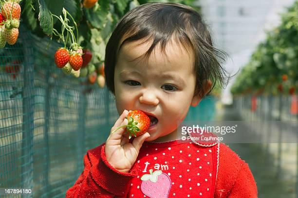 berry nice - peter lourenco stock-fotos und bilder