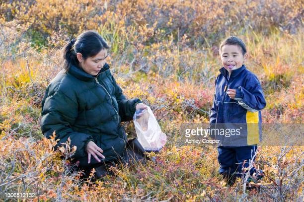 berta tokeinna and son picking berries on the tundra at the mouth of the sepentine river near shishmaref a tiny island between alaska and siberia in the chukchi sea. - between stock pictures, royalty-free photos & images