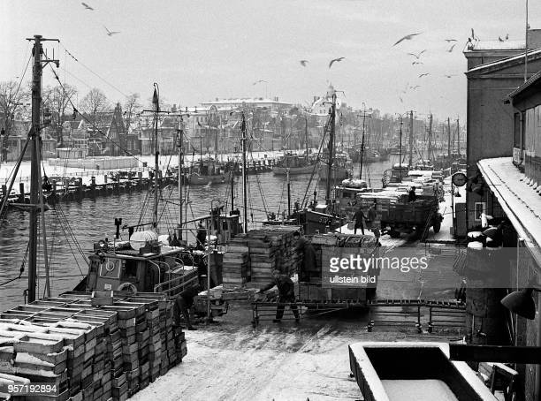 Beschäftigtes Treiben herrscht nach dem Anlegen der mit frischen Fischen beladenen Kutter am Kai der Warnemünder Mittelmole aufgenommen 1970 Der...