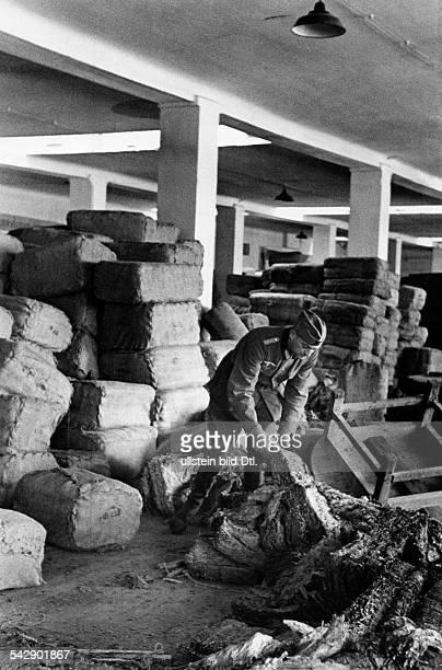 Beschlagnahmung von Tabakbeständen die an die deutsche Wehrmacht verteilt werden sollen 1941Foto Wolfgang Weber