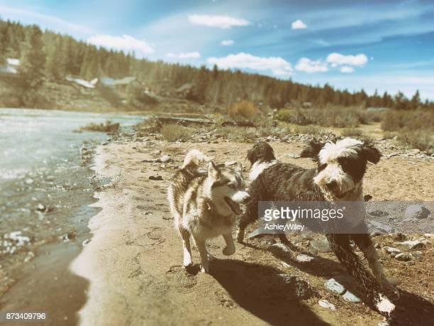 Hund am besten Freunde spielen am Truckee River