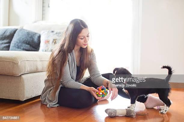 best friend - filhote de cachorro - fotografias e filmes do acervo