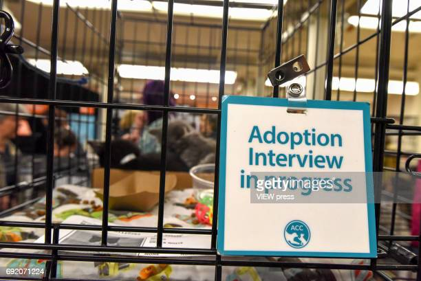Best Friends Pet Super Adoption holds its annual adoption event bringing together more than twenty pet rescue organizations and hundreds of dogs and...