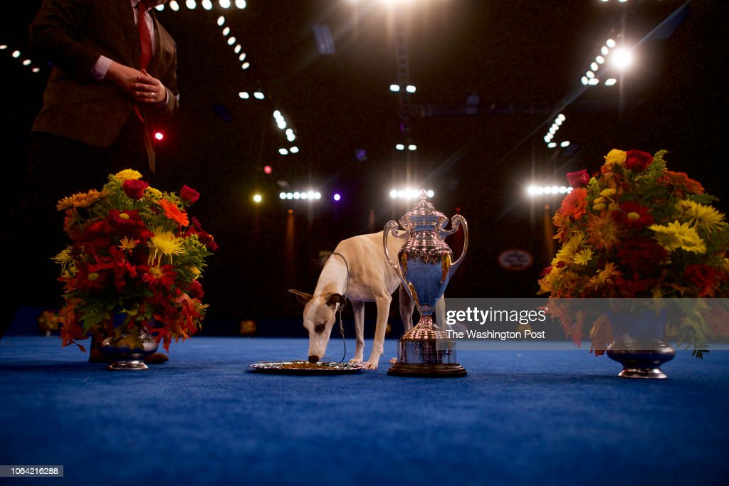 17th Annual National Dog Show : News Photo