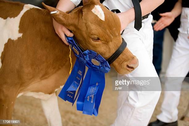 best of show - agricultural fair stock pictures, royalty-free photos & images