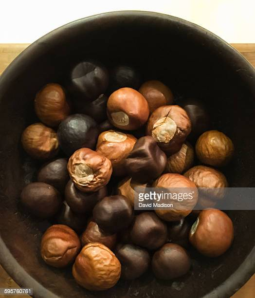 best of the month - picture of a buckeye tree stock photos and pictures