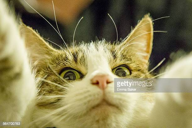 best pet selfie - emma baker stock pictures, royalty-free photos & images