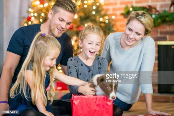 best present - dog eats out girl stock pictures, royalty-free photos & images