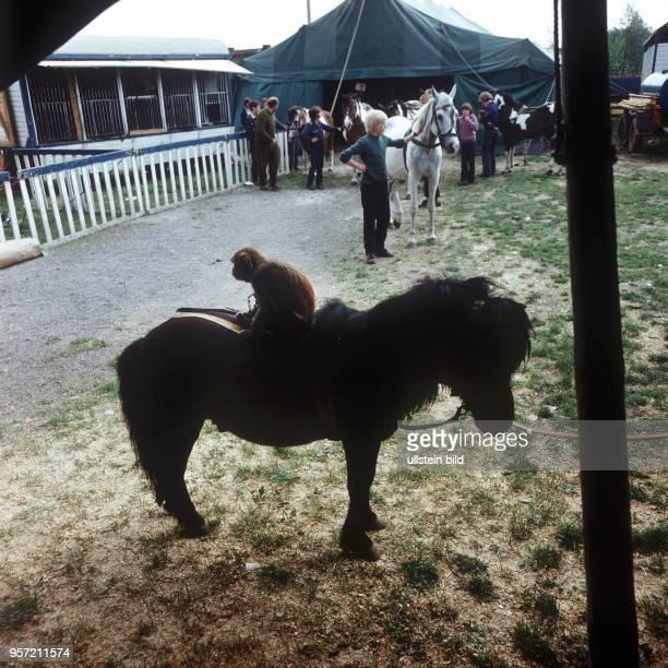 Besucher besichtigen Tiere Zelt und Wagen vom Zirkus Hein bei einer Station in Harzgerode undatiertes Foto aus dem Jahr 1974 Der Zirkus Hein wurde...