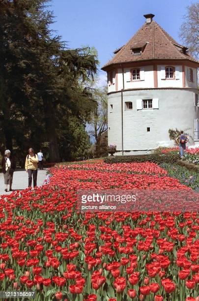 Besucher der Bodensee-Insel Mainau laufen am 25.4.2000 an einem Meer von Tulpen vorbei. Im Hintergrund ist der alte Wehrturm zu sehen. Frühlingshafte...