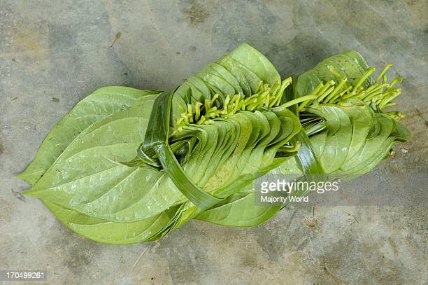 Betel leaves in Sangram Pungi a Khashia village near Jaflong in Sylhet district Betel leaf or 'paan' is a tropical creeper belonging to the pepper...