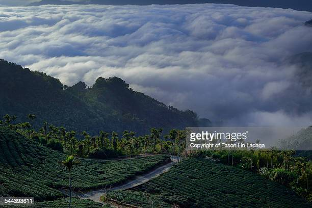 Betel On Clouds