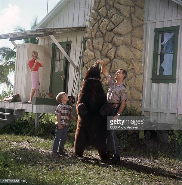 BEN Beth Brickell as Ellen Wedloe Clint Howard as Mark Wedloe Bruno the Bear as Gentle Ben and Dennis Weaver as Tom Wedloe Image dated 1968