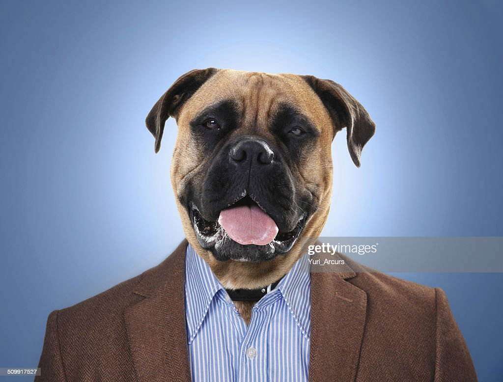 Better a dog head that the lion's tail : Stock Photo