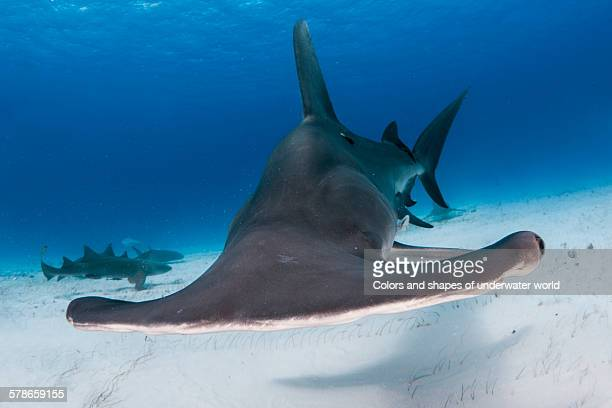better be afraid - south bimini stock photos and pictures