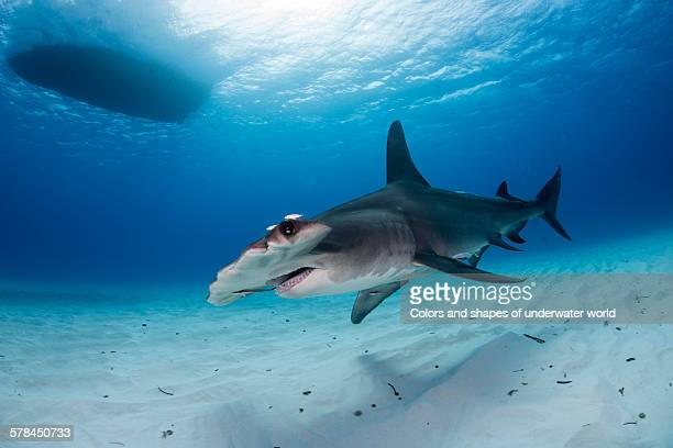 better watch out - south bimini stock photos and pictures