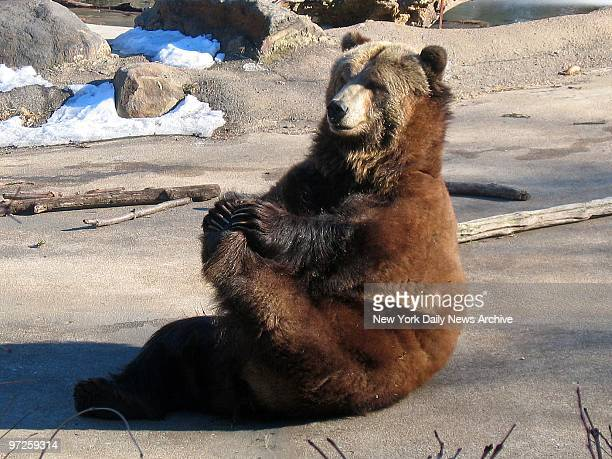 Betty limbers up with some exercises at the Bronx Zoo The bear truth is she wants to keep her girlish figure