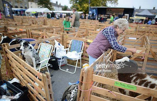 Betty Palmer paints the horns of one of her sheep during the sheep fair in Masham SEPTEMBER 28 2013 in Masham The fair celebrating its 25th year...