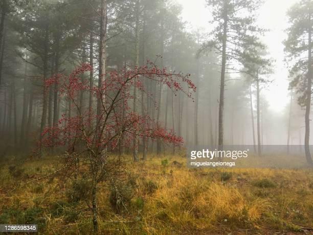 between fall and winter - foggy landscape - miguelangelortega fotografías e imágenes de stock