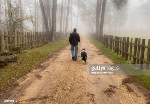 between fall and winter - walking the dog in a foggy landscape - miguelangelortega fotografías e imágenes de stock