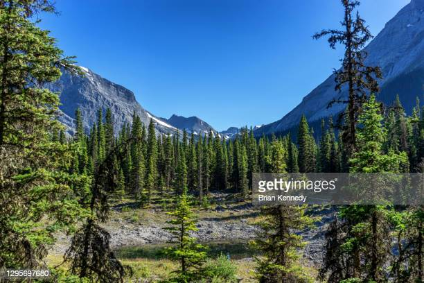 between mountains - kananaskis country stock pictures, royalty-free photos & images