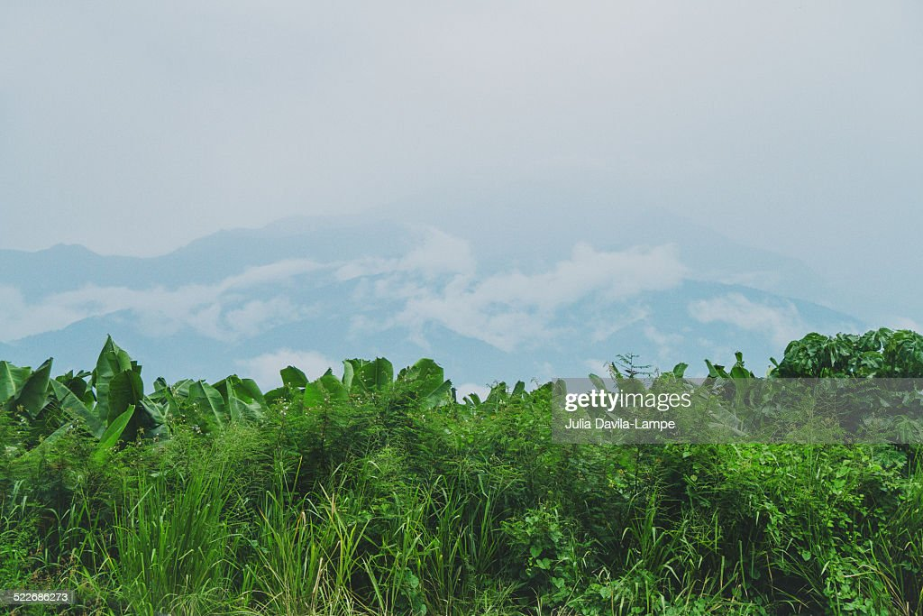 Between the mountains and the coast in Ecuador : Stock Photo