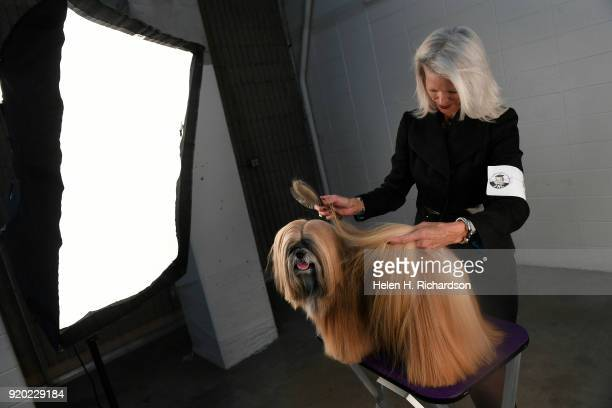 Bev Adams brushes the long hair of her grand champion Lhasa Apso Johnny Depp during the Colorado Kennel Club Dog Show at the National Western Complex...