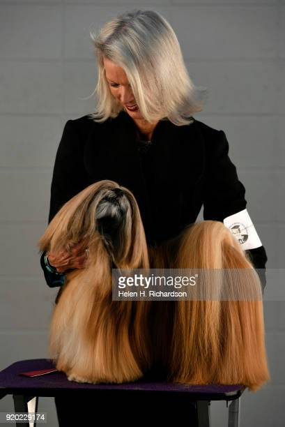 Bev Adams poses for a portrait with her grand champion Lhasa Apso Johnny Depp during the Colorado Kennel Club Dog Show at the National Western...