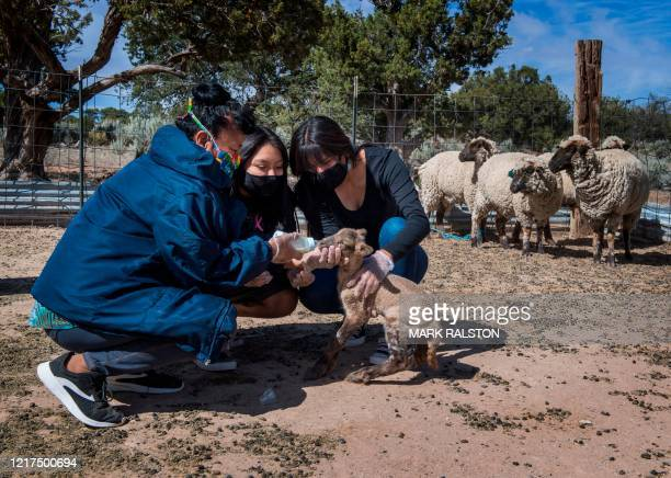 Beverly Gorman who is a Navajo elder feeds a newborn lamb with grandchild Nizhoni and daughter Naiyahnikai near the Navajo Nation town of Steamboat...