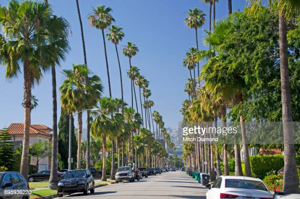 Beverly Hills Palm Tree lined streets