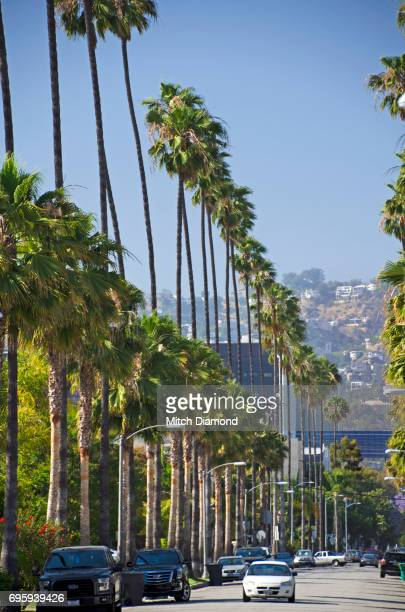 beverly hills palm tree lined streets - beverly hills foto e immagini stock