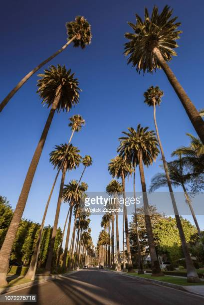 beverly hills - palm trees 4 - beverly hills - fotografias e filmes do acervo