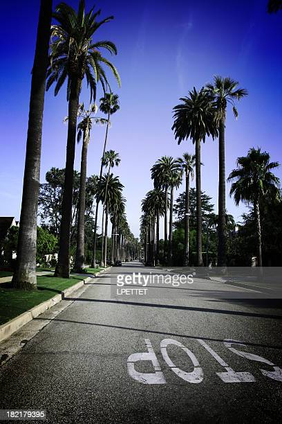 Beverly Hills palm trees with clear skys