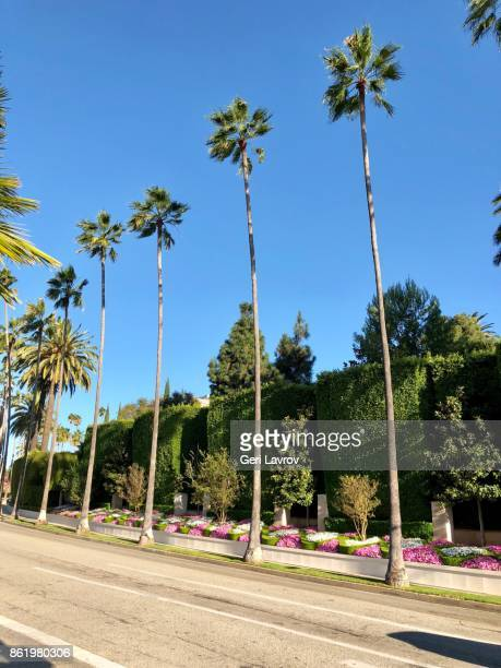beverly hills - beverly hills california stock pictures, royalty-free photos & images