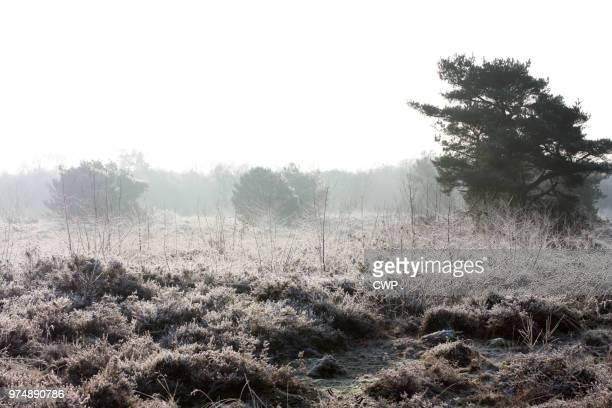bevroren mist - bevroren ストックフォトと画像