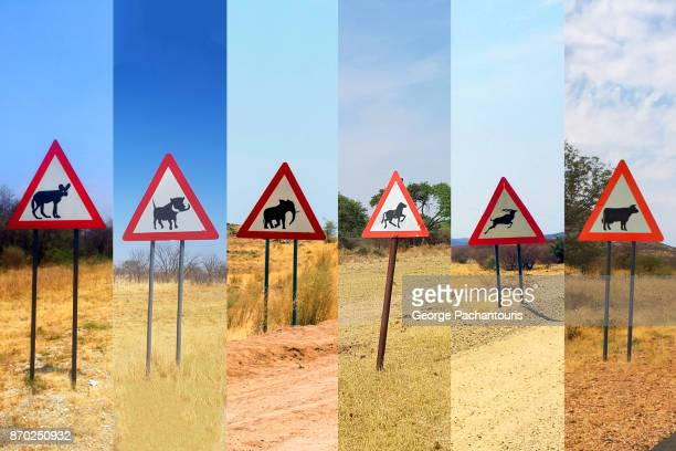 beware of animals road signs - springbok deer stock photos and pictures