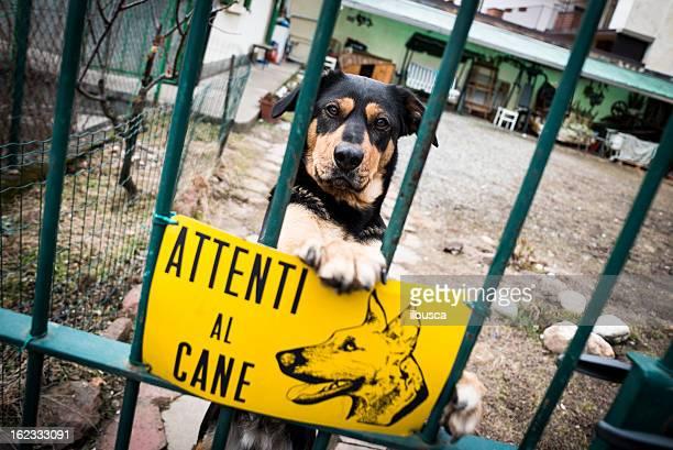Beware of dog, italian sign