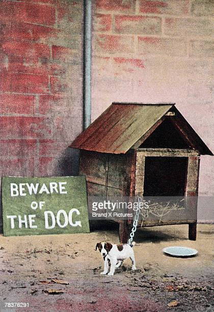 Beware of dog sign with small dog
