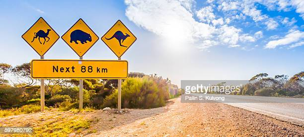 beware of kangaroo, wombat and camel crossing/ traffic warning/ australian road sign at nullarbor national reserve , south australia, australia - marsupial imagens e fotografias de stock